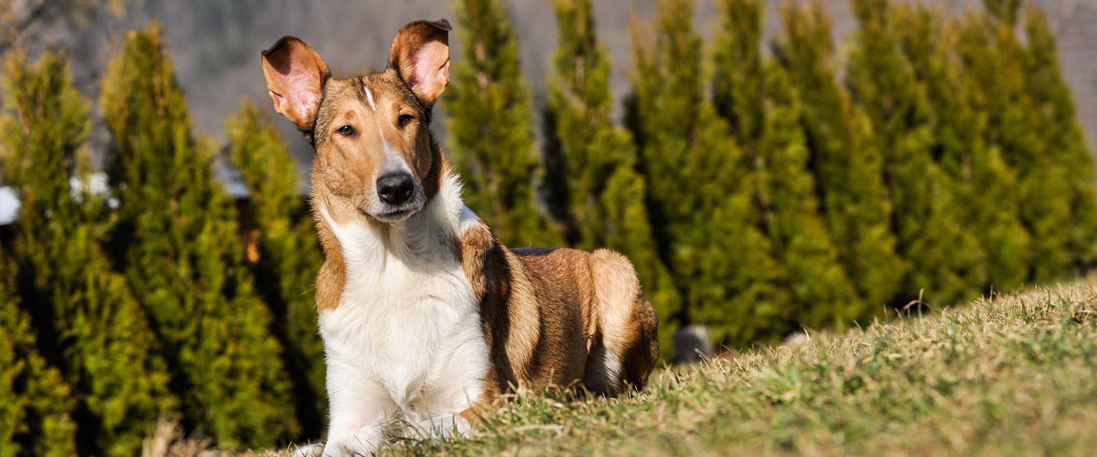Blog z myślą o zdrowiu zwierząt domowych - wkrótce pierwsze wpisy